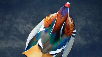© Alexandre Pietra, Switzerland, Shortlist, Open competition, Natural World & Wildlife, Sony World Photography Awards 2021