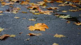 De närmaste dagarna väntas mycket regn