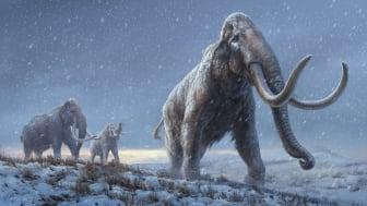 En miljon år gammalt DNA belyser mammutarnas genetiska historia