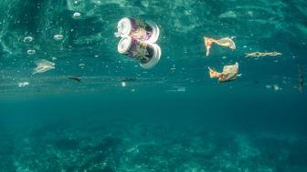 Regeringen vill i sin budget för 2018 göra flera stora satsningar för ett rent hav. Fotograf: FLPA/Colin Marshall