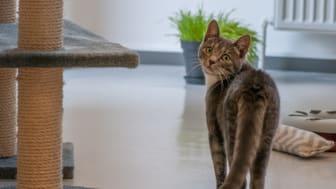 Lad ikke det nervøse blik narre dig. Din kat vil sætte pris på at blive neutraliseret og mærket!