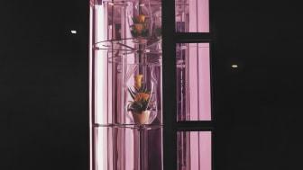 Till Rabus, Automate à fleurs / flower night-dispenser, 2009