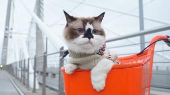 Katzenleid und Social-Media-Erfolg gehen oft Hand in Hand. (Foto: Max Ogden via Unsplash)