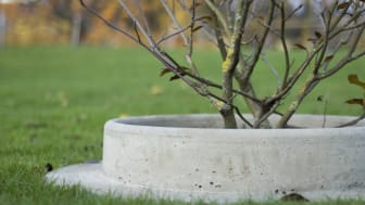 Planting ring made of concrete. Photo: Samuel Lindahl