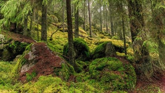 Dofter avslöjar vilken skog som är mest värdefull att bevara