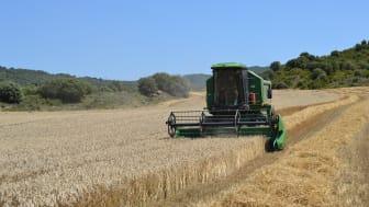 Compromiso Harmony, el programa de agricultura sostenible de Mondelez, recoge unas 27.000 toneladas de trigo en la cosecha de este año