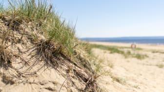 Klassiska sanddyner i Halmstad. Foto: Destination Halmstad
