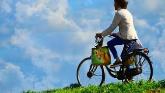 Cykeltur: Stenar och statyer med mera