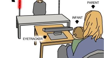 Illustration av experimentet som undersökte initiering av delad uppmärksamhet hos spädbarn. Illustration: Pär Nyström
