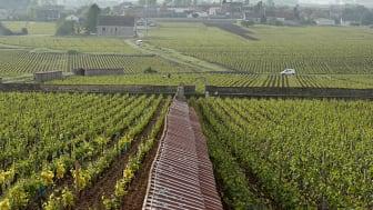 Winefinder.se störst på Bourgogneviner