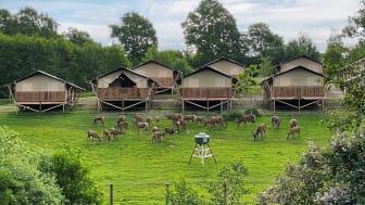 Den 22 juni är det premiär för glampingsatsningen Wild Lodge i Skånes Djurpark.