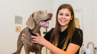 Hundutbildningen på Realgymnasiet