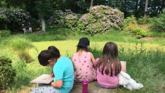 Studier af rododendroner i parken omkring Nivaagaards Malerisamling