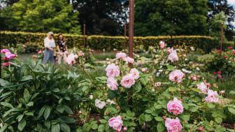 Hellekis Trädgård är en av platserna vi tipsar om i Trädgårdsliv i Skaraborg. Foto: Monika Manowska/Turistrådet Västsverige
