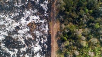 Gråhvid aske på et nyligt afbrændt skovområde på Chacoen i Argentina. Hvert år omdannes store skovarealer her til sojaplantager. Foto: Mighty Earth