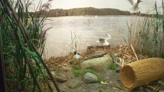 Landskab ved fortidens fjord