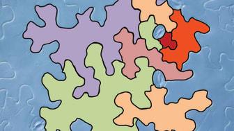 Illustration av pusselbitsformade epidermisceller på ett blad. De kaffebönsformade strukturerna är bladets klyvöppningar. Illustration: Mateusz Majda