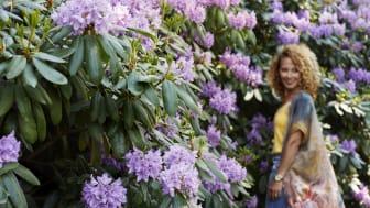 Rhododendrondagar