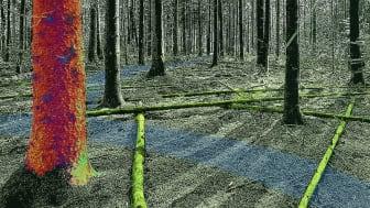 Virtuell skogsmiljö driven med fysikbaserad simulering. Illustration: Martin Servin