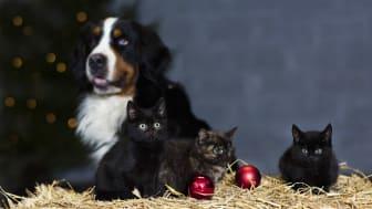 Både hundar och katter kan sätta i sig mindre prydnader som fastnar i halsen och i värsta fall kväver dem.