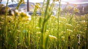 Hagainitiativet vill se konkret politik för minskad klimatpåverkan