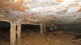 KAN GJØRE STOR SKADE: Av råtesopper som angriper boligen er ekte hussopp den verste og den som kan gjøre størst skade på bygningen. Foto: Norsk Hussopp Forsikring