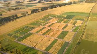 Långliggande jordbruksförsök är en unik resurs för studier av hur odlingssystemet bör vara utformat när vi behöver anpassa det till ett förändrat klimat. Här ett foto från Brody i Polen. Foto: Zuzanna Sawinska