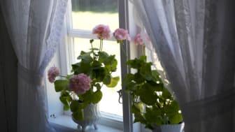Månadens blomma - april 2011