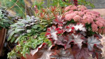 Euphorbia och några vänner