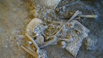 Stenålderns jägare/samlare assimilerades av samtidens jordbrukare