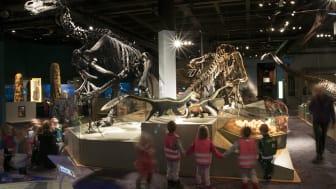 Naturhistoriska riksmuseet lockar allt fler besökare