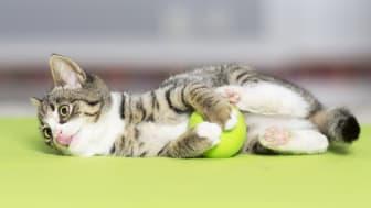 Katter behöver aktiveras och ha en stimulerande inomhusmiljö