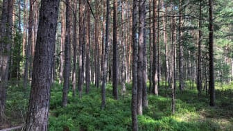 2021-04-22 Webbinarium: Skogens skyttegravskrig – fredsmäklare sökes!