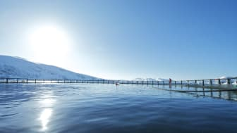 Exports of Norwegian salmon continue to rise