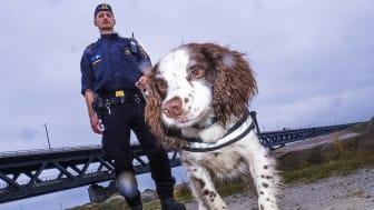 Årets narkotikasökhund Zak tillsammans med sin förare Niklas Delin med Öresundsbron i bakgrunden. Foto: Anders Roos