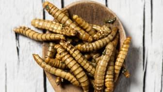 Bild på insekter och en slev. Källa: Colourbox