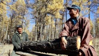 Lokalbefolkning bevarar skog i Mongoliet
