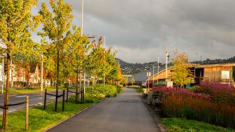 Bjørnstjerne Bjørnsons gate i Drammen_foto Anita Tveiten