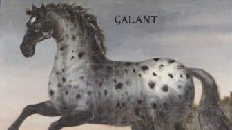 Trofasta hästar, frusna apor och en kissnödig katt - berättelserna om slottets djur är många.