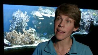 Avsnitt 2: Havsakvariet töms