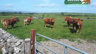 BovINE gives European beef farmers a voice & platform to share urgent grassroots needs and 'on farm' practical solutions to deliver sustainability