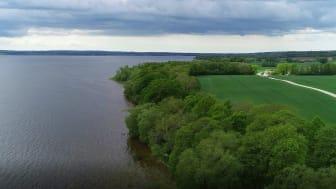 Industrihampa på frammarsch i världen - med odlingspotential i Skåne