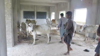 1905-WTG-Odisha-Soforthilfe-Rinder-Shelter