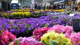 Pflanzen, Blumen, Garten- und Outdoorzubehör, kulinarische Köstlichkeiten
