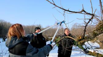 Vi delar med oss av våra kunskaper om hur du bäst sköter om ditt fruktträd