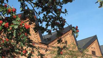 Kulturcentrums tak med rönnbär.