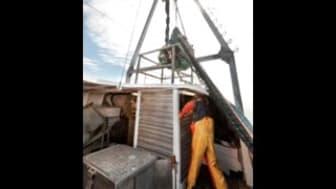 Yrkesfiskarnas resa mot ett hållbart fiske