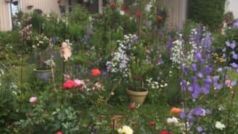 Gun-Britts trädgård i Lindesberg - en av trädgårdarna som deltar i årets Tusen Trädgårdar.