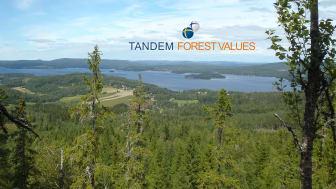 Tandem Forest Values-utlysningen har lockat 72 sökande från 23 universitet och forskningsinstitut. Foto: Ylva Nordin.
