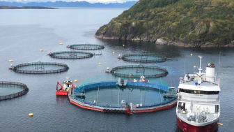 Smolt is put into Cermaq's new closed containment system in Horsvågen